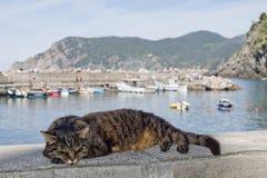 Gato ao descansar no porto de Vernazza imagens de stock