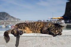 Gato ao descansar no porto de Vernazza imagem de stock royalty free