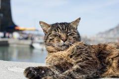 Gato ao descansar no porto de Vernazza fotos de stock