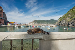 Gato ao descansar no porto de Vernazza fotografia de stock royalty free