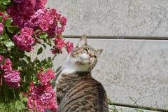Gato ao lado do arbusto cor-de-rosa Fotografia de Stock
