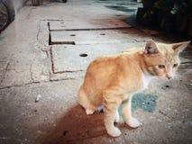 Gato ao longo da estrada Fotografia de Stock