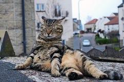 Gato apenas que descansa Imagens de Stock Royalty Free