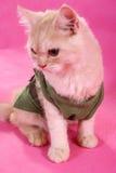 Gato arropado Imagenes de archivo