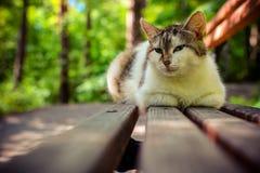 Gato ascendente cercano de la calle en el banco de parque Gato divertido con los ojos de otro gato imagen de archivo libre de regalías