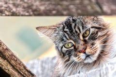 Gato asombroso Fotografía de archivo