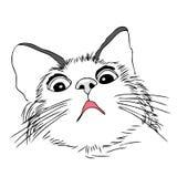 Gato assustado, preocupado Fotografia de Stock Royalty Free