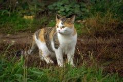 Gato asustado Imagen de archivo libre de regalías