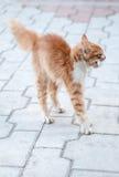 Gato asustado Imagenes de archivo
