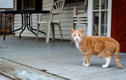 Gato asustado Imágenes de archivo libres de regalías