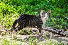 Gato asustado desamparados Imagen de archivo