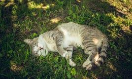 Gato asustado divertido fotografía de archivo libre de regalías