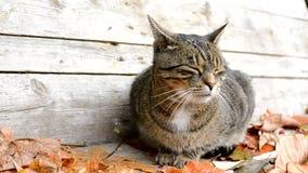 Gato asustado en hojas de otoño