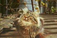 Gato atento Fotos de archivo libres de regalías