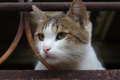 Gato atento del animal doméstico Imagen de archivo libre de regalías