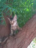 Gato atento na árvore para o alimento foto de stock royalty free