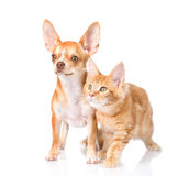 Gato atento y perro que miran lejos En el fondo blanco imagenes de archivo