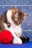 Gato atigrado adulto Fotos de archivo libres de regalías