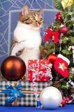 Gato atigrado adulto lindo Fotografía de archivo libre de regalías