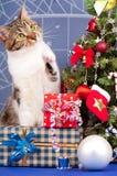 Gato atigrado adulto lindo Foto de archivo