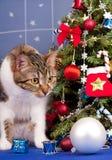 Gato atigrado adulto lindo Imagen de archivo