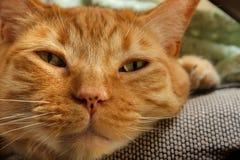 Gato atigrado anaranjado soñoliento Imagen de archivo libre de regalías