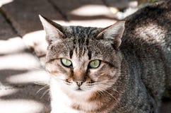 Gato atigrado de ojos verdes Foto de archivo libre de regalías