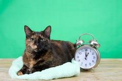 Gato atigrado de Tortie que se sienta al lado de horario de verano del despertador imagen de archivo libre de regalías