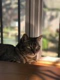 Gato atigrado hermoso en la oscuridad Foto de archivo libre de regalías