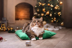 Gato atigrado y gato feliz Estación 2017, Año Nuevo de la Navidad Imagenes de archivo