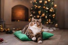 Gato atigrado y gato feliz Estación 2017, Año Nuevo de la Navidad Foto de archivo libre de regalías