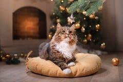 Gato atigrado y gato feliz Estación 2017, Año Nuevo de la Navidad Fotos de archivo libres de regalías
