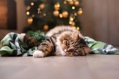 Gato atigrado y gato feliz Estación 2017, Año Nuevo de la Navidad Fotos de archivo