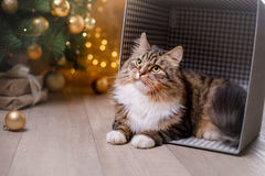 Gato atigrado y gato feliz Estación 2017, Año Nuevo de la Navidad Imágenes de archivo libres de regalías