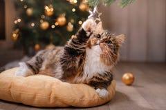 Gato atigrado y gato feliz Estación 2017 de la Navidad, Año Nuevo, días de fiesta y celebración Imágenes de archivo libres de regalías