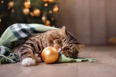 Gato atigrado y gato feliz Estación 2017 de la Navidad, Año Nuevo, días de fiesta y celebración Foto de archivo