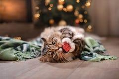 Gato atigrado y gato feliz Estación 2017 de la Navidad, Año Nuevo, días de fiesta y celebración Fotos de archivo libres de regalías