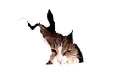 Gato atrás da parede de papel foto de stock