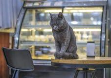 Gato azul Imágenes de archivo libres de regalías