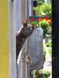 Gato azul ruso que moquea Foto de archivo