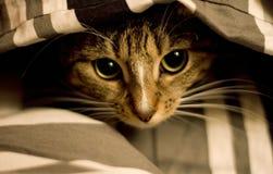 Gato bajo cubierta Fotografía de archivo libre de regalías
