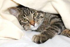 Gato bajo una manta Foto de archivo