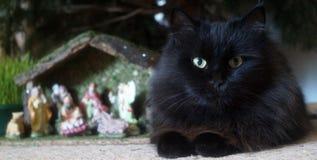 Gato bastante negro Imagen de archivo