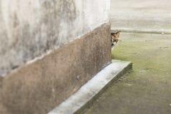 Gato bicolor Fotos de archivo libres de regalías