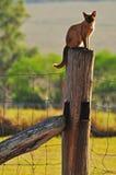 Gato birmano de la granja que se sienta encima del poste de la cerca Foto de archivo