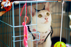 Gato blanco Foto de archivo libre de regalías