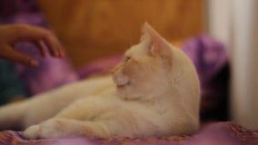 Gato blanco metrajes