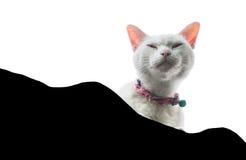 Gato blanco aislado en un tejado de la casa que mira para arriba perspectiva Foto de archivo