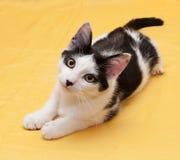 Gato blanco con el adolescente de los puntos negros que miente en fondo de oro Imágenes de archivo libres de regalías