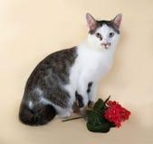 Gato blanco con el adolescente de los puntos que se sienta al lado de la flor roja en grito Imágenes de archivo libres de regalías